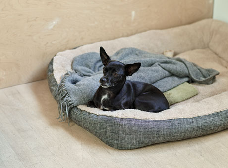 A dog sitting in a dog bed in a workplace