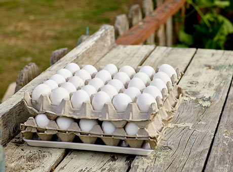 Eggs from ethically raised free range chickens await shipment to the local farmer's market