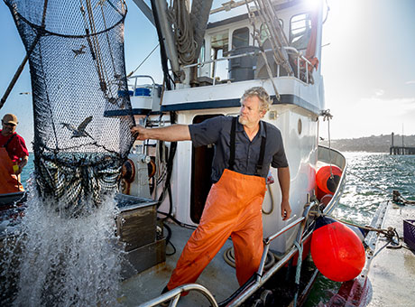 Fisherman on boat operating small enterprise in Canada releases fish caught in net