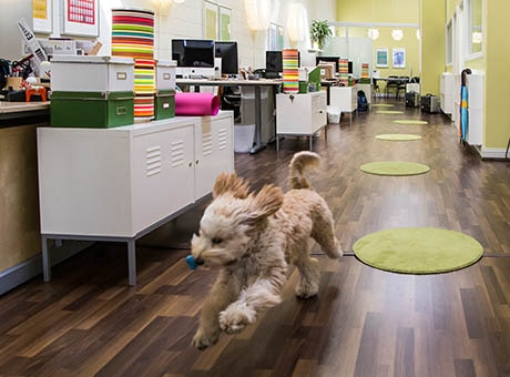 A dog excited to go on a walk runs through a business