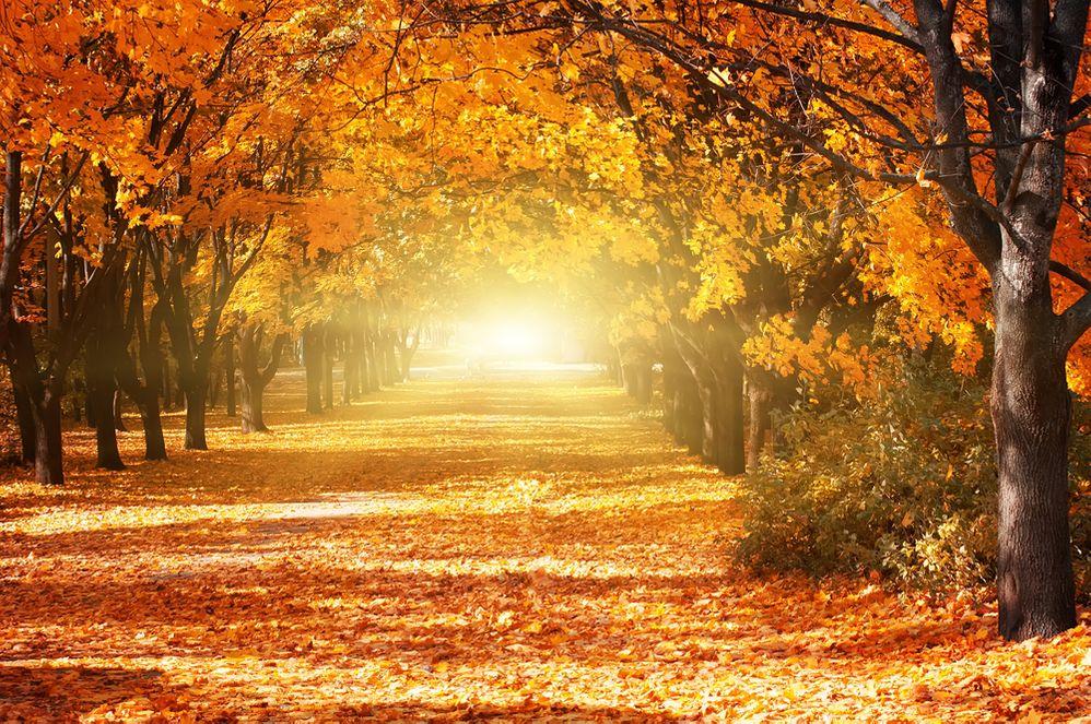 octletter_autumnleaves.jpg